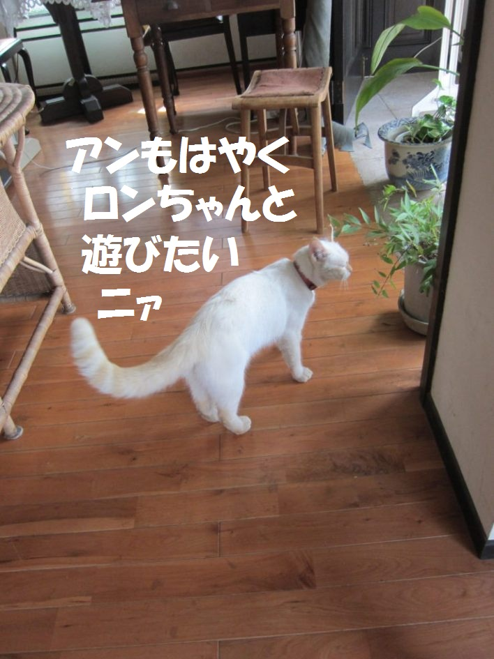 IMG_5092ふ