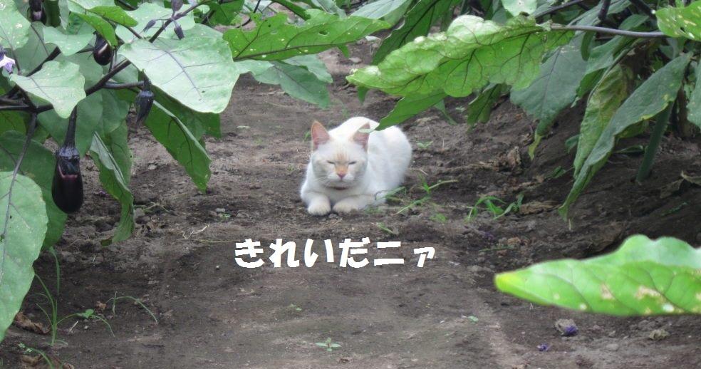 IMG_45133.jpg