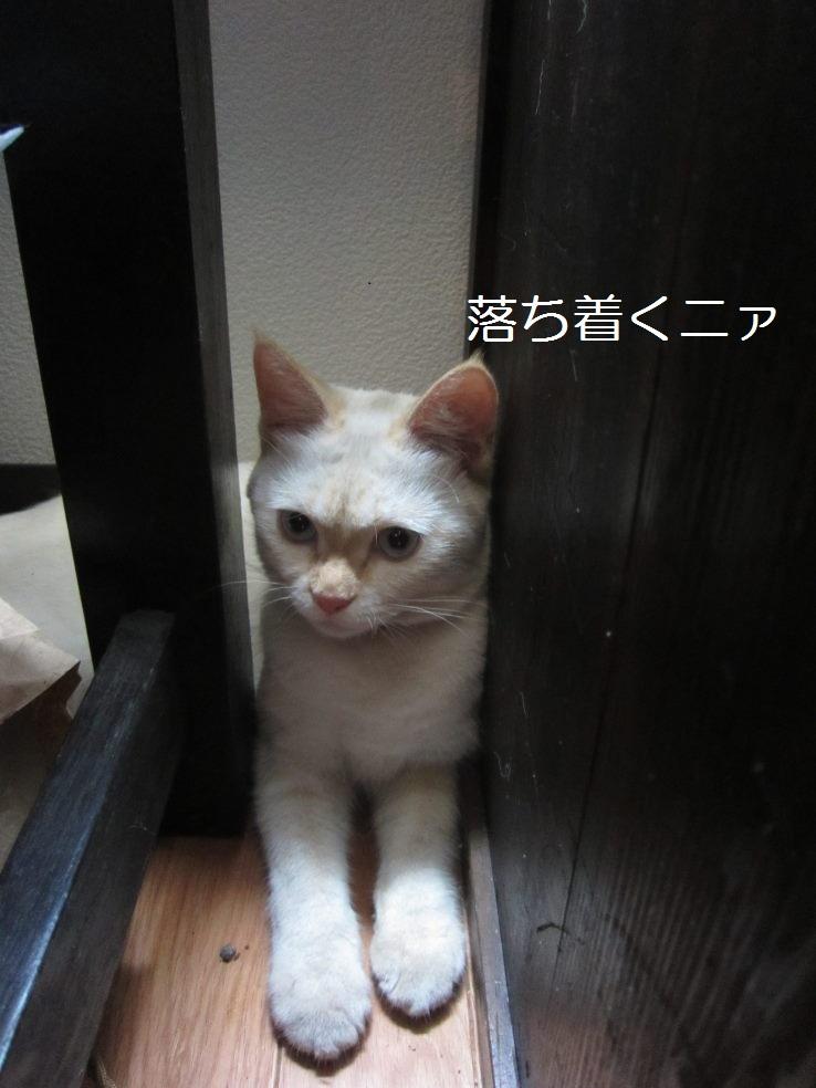 IMG_45933.jpg
