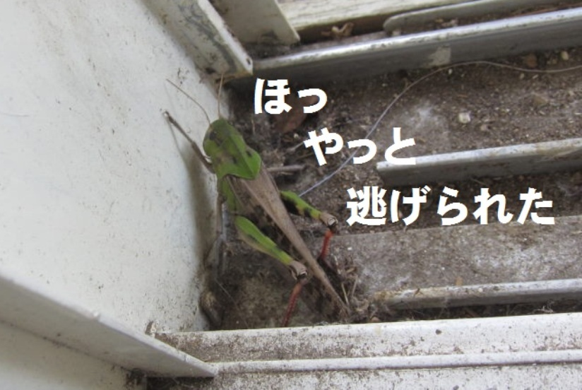 IMG_63577.jpg