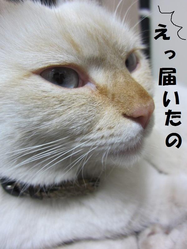 IMG_75733.jpg