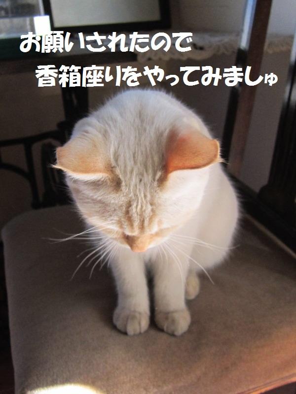 IMG_7798.jpg