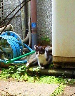 kitten 20120613