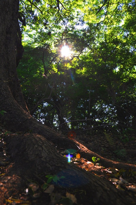 hokekyo lights 20120626DSC_2905 sml