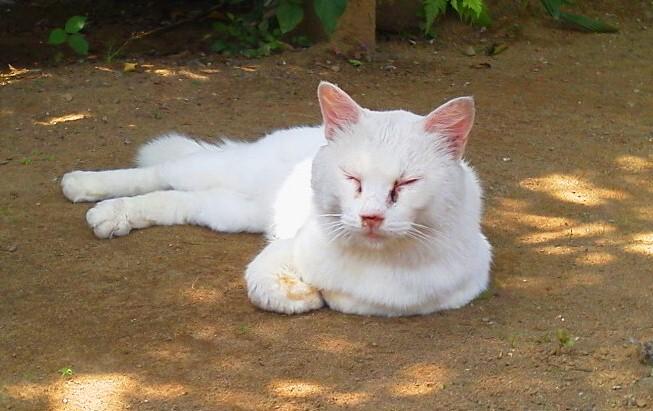 shiromama 20120731