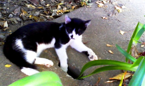 neighbor blwh kitten 20120731-2