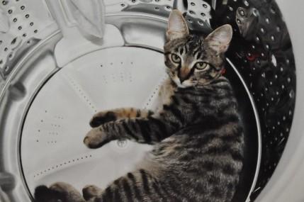 shige in the washing machine