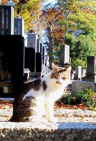 hokekyocatwgravestones201211-4.jpg
