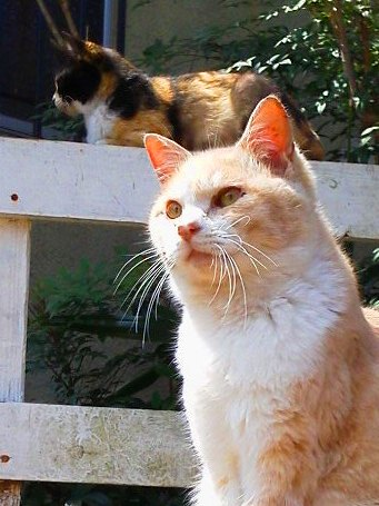 shiromamakids201204closeP1000497.jpg