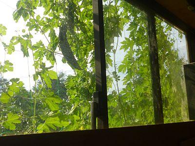 工房の西側窓・・・