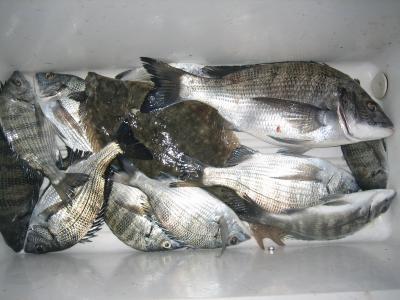 11月10日小浜漁協釣果