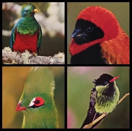 世界の鳥たち