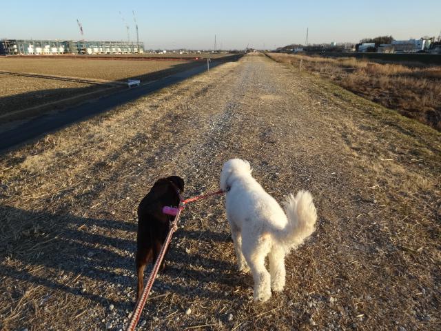 トリミング散歩 017