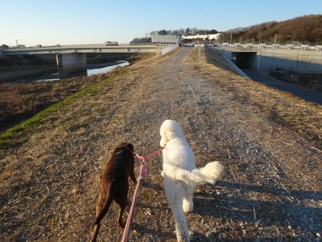 トリミング散歩 019