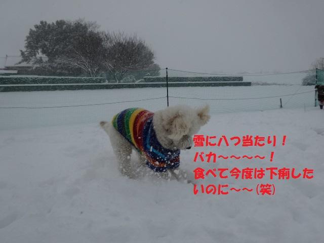 弾丸ツアー 041