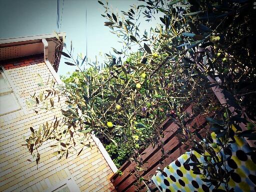 LINEcamera_share_2012-10-30-14-25-21.jpg