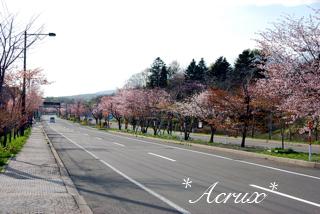 2012sakura_02.jpg