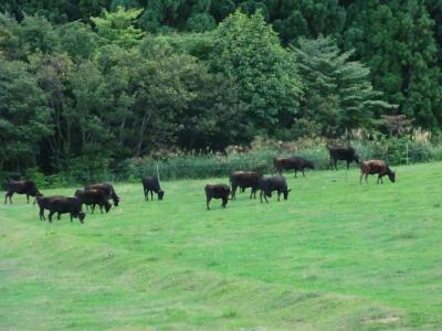田中畜産⑥