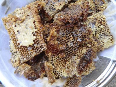 蜂蜜採集④