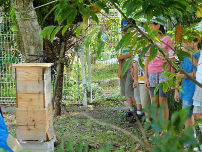 蜂蜜採集①