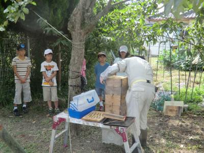 蜂蜜採集⑤