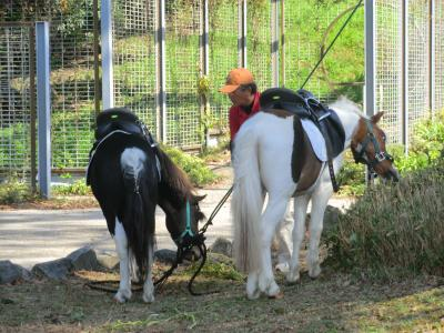 有馬富士公園⑧