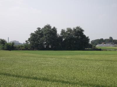 見沼の里山3