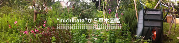 草木図鑑ヘッダ_2