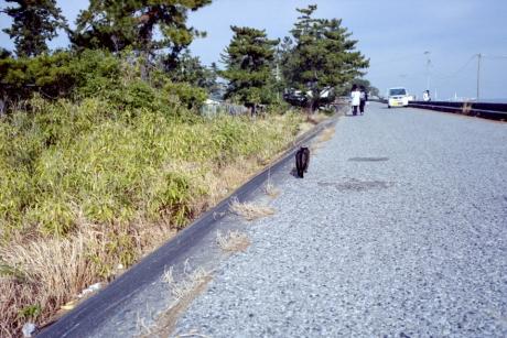 o_road2.jpg