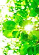 光と愛の感謝日記 善意の癒し