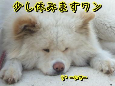 休みますワン。