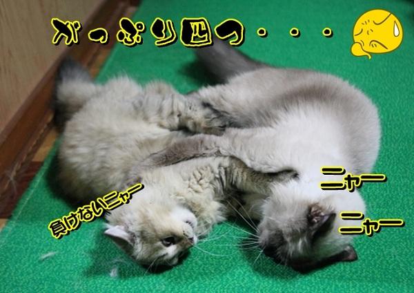 Baidu IME_2012-8-17_9-23-50