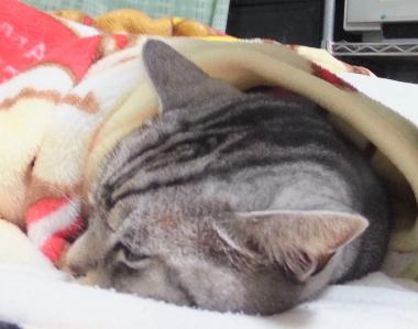 毛布は温かいにゃ