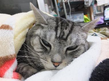 毛布は温かいにゃ2