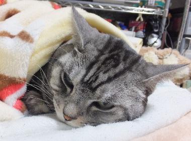毛布は温かいにゃ1