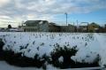 茶畑の積雪①