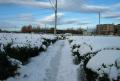 茶畑の積雪②