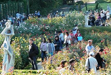 神代植物公園「薔薇フェスタ」