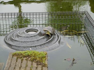 田原ふるさと公園 (13)