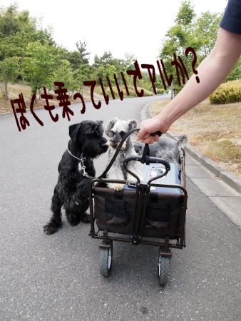4_20120529220359.jpg