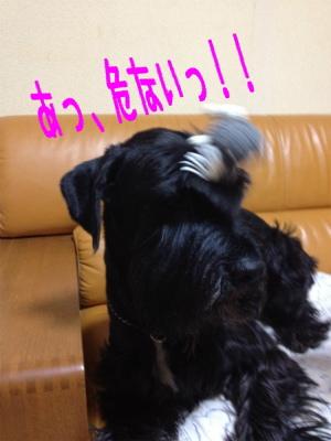 reno_5_20120430235057.jpg