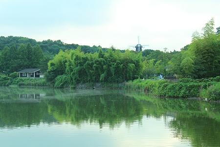 早朝の緑地
