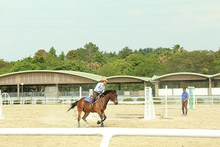 飛ぶ走る、お馬さん