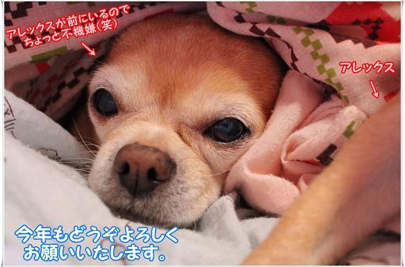 092kotoyoro.jpg