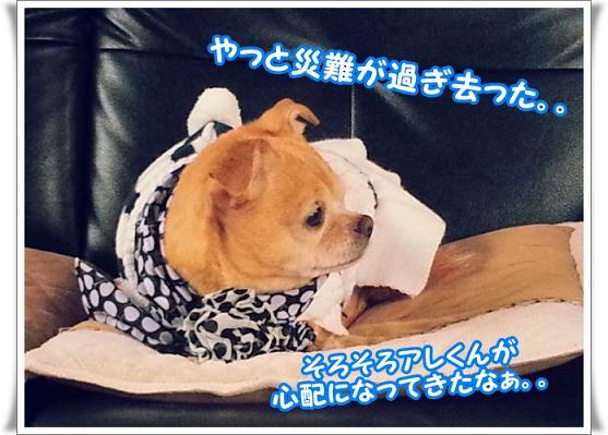 20121106_094032sugisatta.jpg