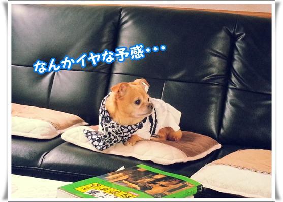 20121106_094201iyanayokan.jpg