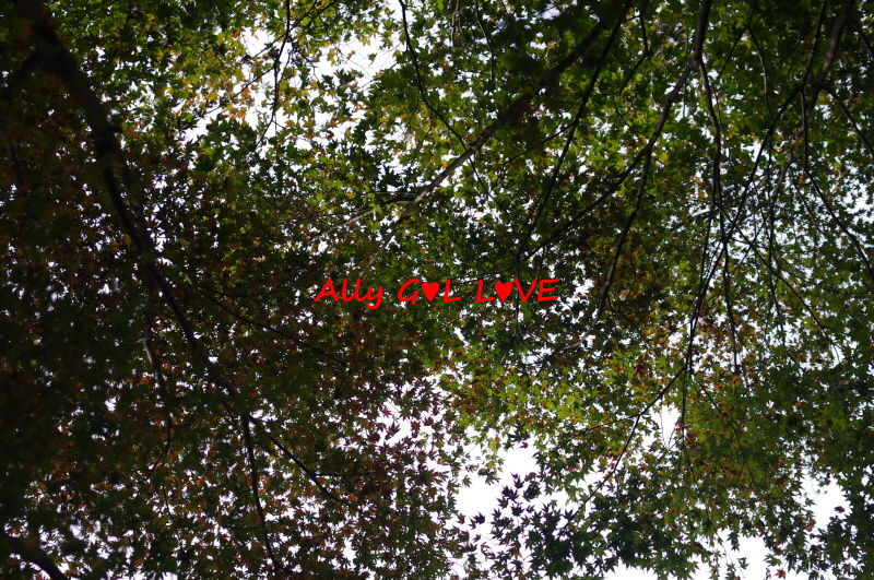 IMGP5193_201412180028506b1.jpg