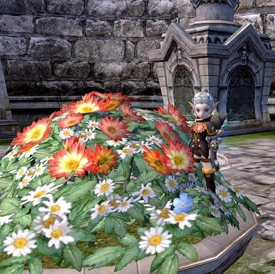お花畑のアクロ