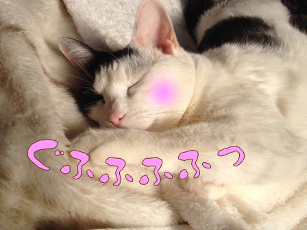 ushiko04.jpg
