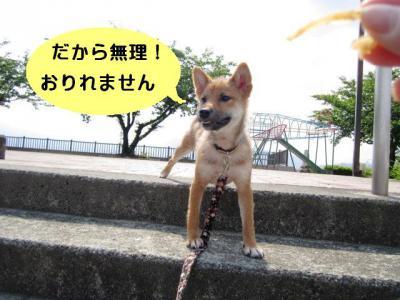 IMG_0331blog.jpg
